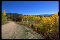 aspens-with-road-left-22.4